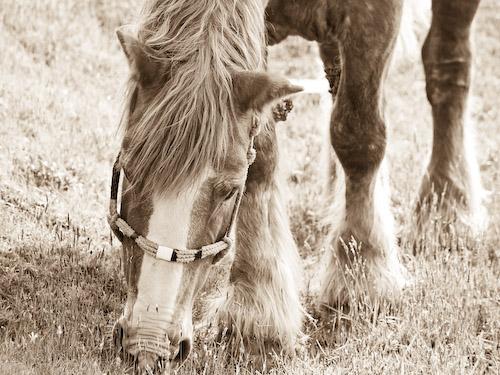 草千里の馬